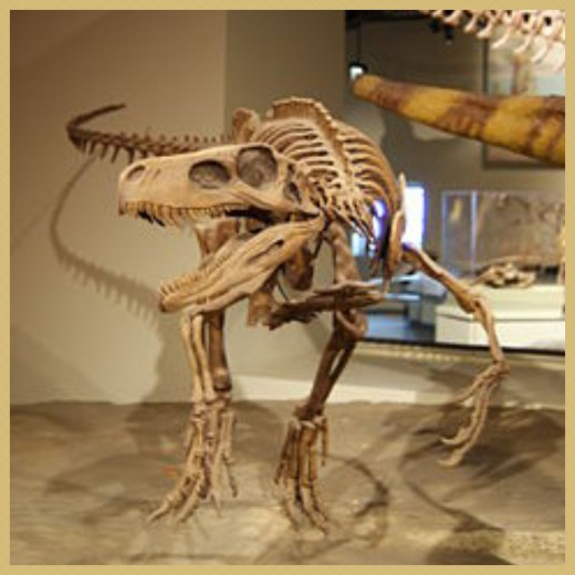 A Mounted Skeleton Cast of a Herrerasaurus Dinosaur