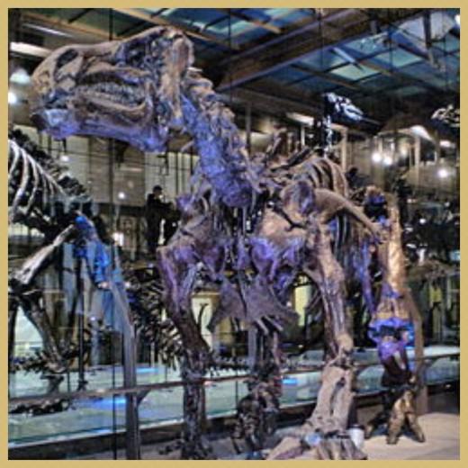 Iguanodon - Belgian Royal Institute