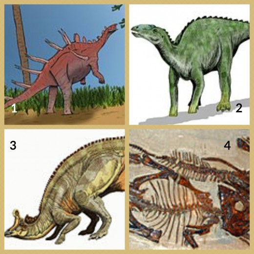 1. Kentrosaurus dinosaur 2. Kritosaurus 3. Lambeosaurus 4. Leptoceratops (fossils at the Canada Museum of Nature)