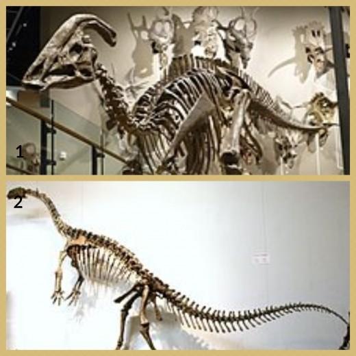 1. Parasaurolophus Dinosaur 2. Plateosaurus Dinosaur