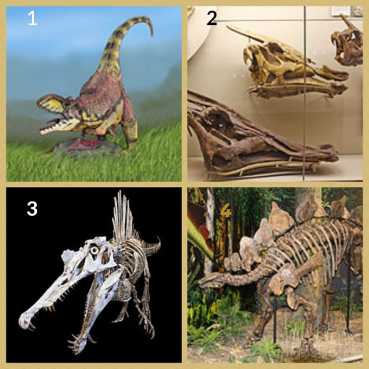 1. Rajasaurus Dinosaur  2. Saurolophus Dinosaur (Moscow Paleontological Musuem) 3. Spinosaurus 4. Stegosaurus Dinosaur