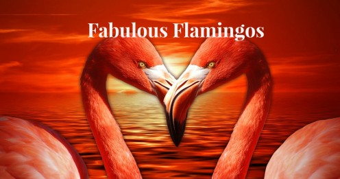 This pair of love-bird flamingos demonstrate the beauty, elegance, and gentle natures of these birds.