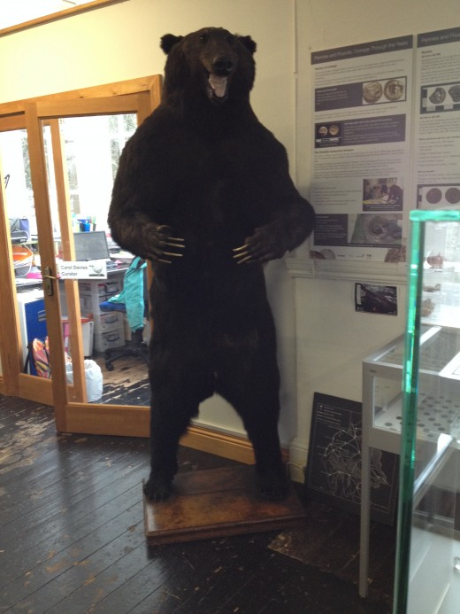 The museum has an impressive collection of stuffed animals, as well as plenty of local history. I remember this bear from childhood and am glad to see that he's still present.