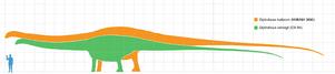 Diploducus Dinosaur - scale