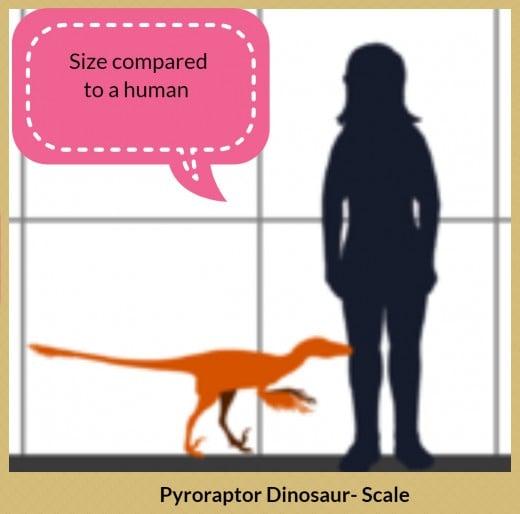 Pyroraptor dinosaur - scale