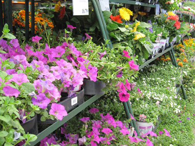 Walking through the garden center to enjoy the flowers and get a little exercise