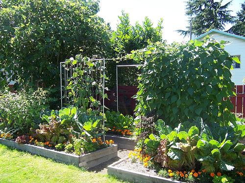 Meghan's Old Garden