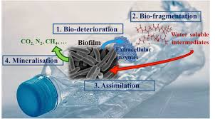 Plastic Biodegradation