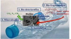 Biodegradation of Organic Compounds and Plastic: A Review