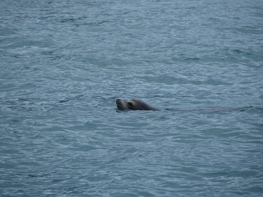 We saw one seal hitching a ride on a stern platform.