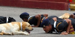 Tale of a Labrador who aided the Indian Army