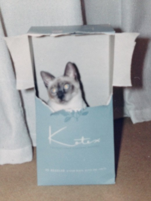 There's something about kittens and boxes....
