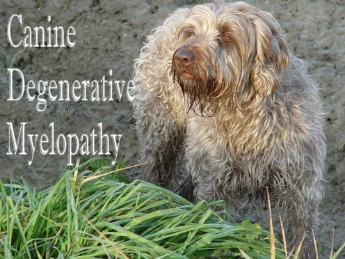My Experience With Incurable Canine Degenerative Myelopathy