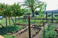 Natural Garden Pest Management