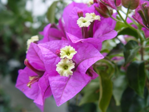 We also saw a lot of bougainvillea plants.