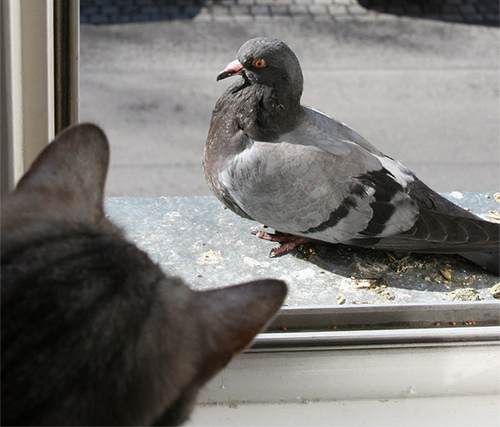 This furry baby might just be excited, or might be practicing it's killing bite. Either way, if the window opens that pigeon is toast.