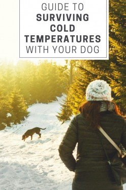 A Guide to Surviving Cold Temperatures With Your Dog