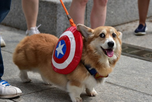 Is your new puppy ready to fill that superhero role?