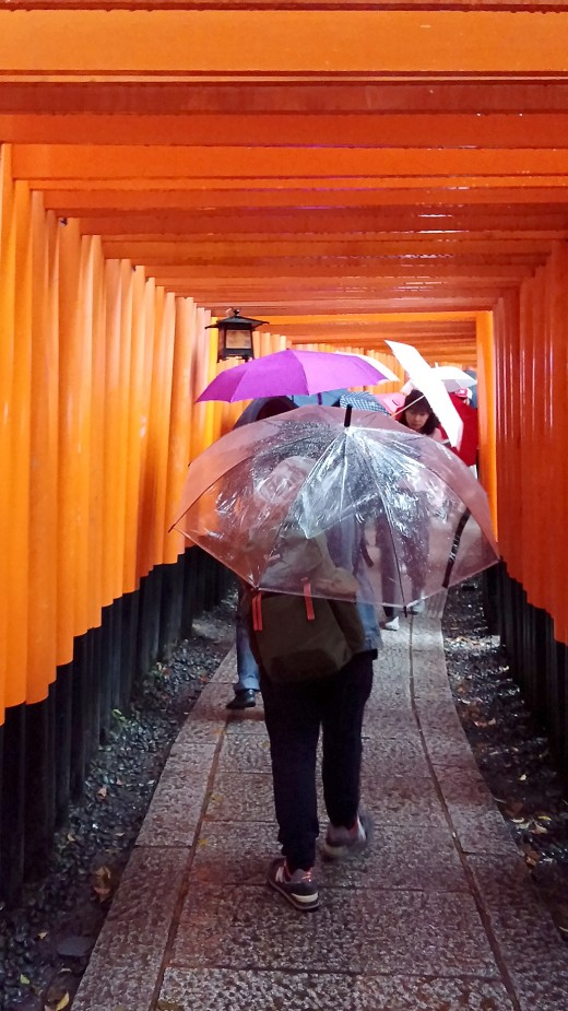The dense torii path offers little shelter.