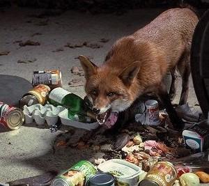 Caught red-handed - pardon the pun - the bin raider