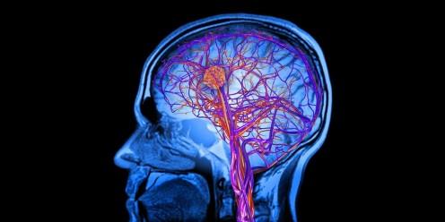Neuroscience Basics: The Nervous System - Part 2