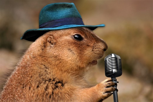 On Groundhog Day the groundhog delivers a message to the human population