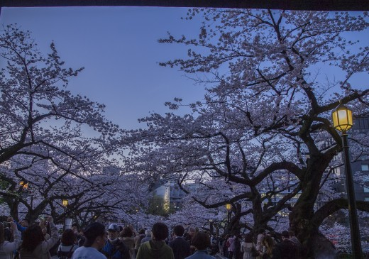 People enjoying hanami at night