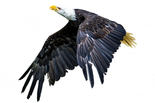 That Eagle Flies Too High For You