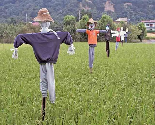 Scarecrow Japan Paddy Field I took this photograph and contribute it to the public domain.