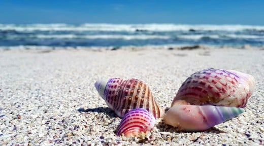Collecting shells is a traditional beach activity.