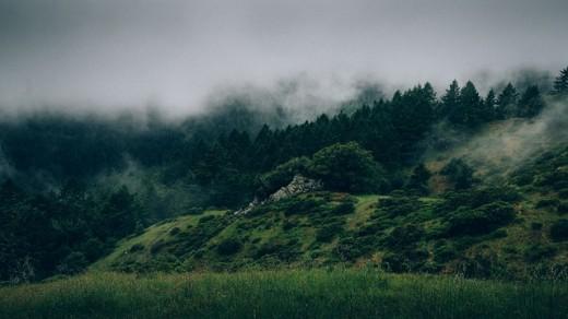 The Misty Moors
