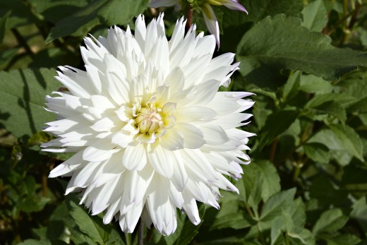 Place any white flower in a container of water. Add flood coloring and behold the magic of color in the petals.