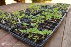 How to Start Plant Seeds Indoors