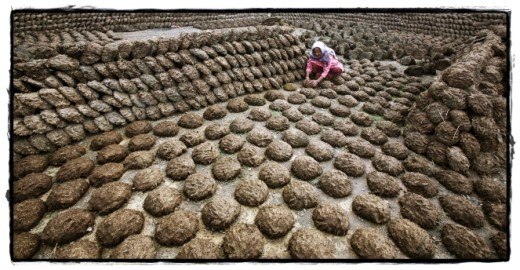 ~piles of dung cakes are traditionally used as fuel in India for making food~