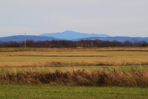 View of Mt. Mansfield, Vermont's tallest mountain as seen from the grassland management unit of Missisquoi National Wildlife Refuge.