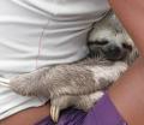 How To Take Care Of The Exotic Pet: Sloth