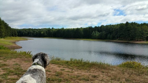 Dunkin enjoying the fresh air and views of water.