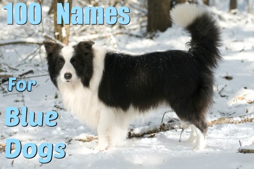 100 Unique Names for Blue and Gray Dogs