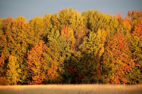 Fall Foliage-Missisquoi National Wildlife Refuge