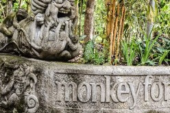 Should You Visit the Sacred Monkey Forest in Ubud, Bali?