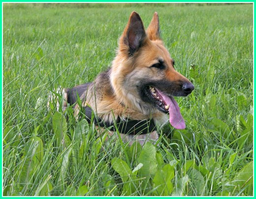 A well trained dog is a pleasure to have with you when you travel.