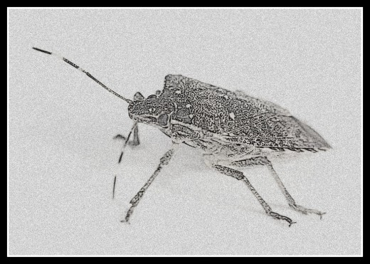 Insects as s source of food, is not a new idea.