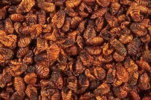 Dried Silkworm Pupae.