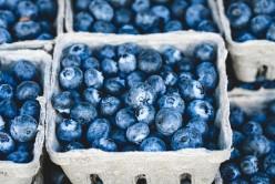 The Wild Blueberry in Oxford Nova Scotia
