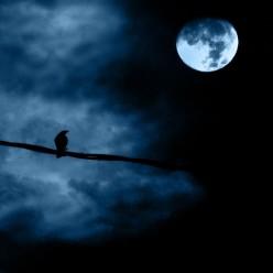 Halloween Black Crows