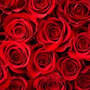Narisa Fontes profile image