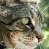 Carb Diva profile image