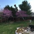 Original Poems: Anticipating Spring's Arrival