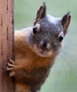 Sammy, the Smart Squirrel