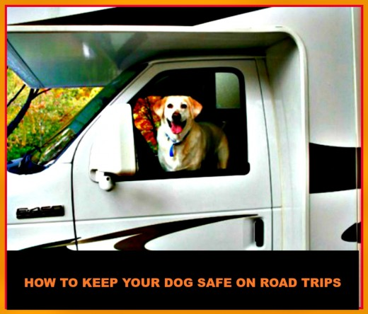 You need to protect your dog's safety when taking road trips.